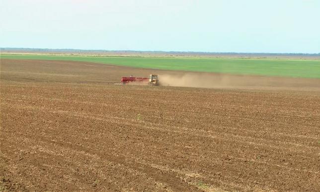 Площади посева масличных и кормовых культур увеличены в ЗКО