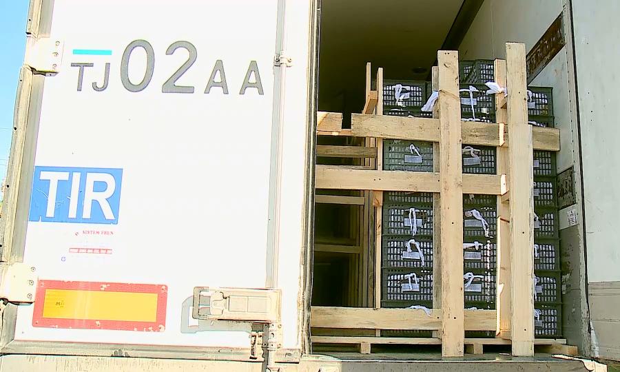 Зараженные фрукты пытались завезти в Казахстан из Кыргызстана