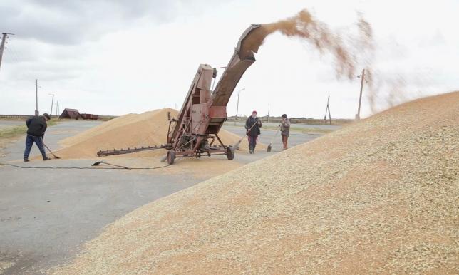 Крестьяне Костанайской области сдают зерно на элеваторы