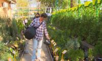 Проект «Город без заборов» реализуют в Алматы