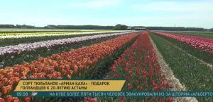 Новый сорт тюльпанов вывели в Нидерландах в честь Астаны