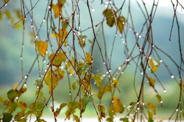 На большей части территории Казахстана сохраняется дождливая погода