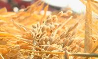 Инновационный метод утилизации растительных отходов предлагают учёные Приаралья