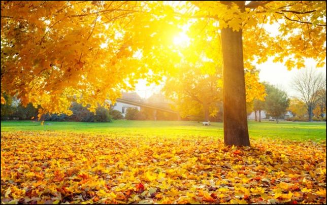 Прогноз погоды на 13-14 октября