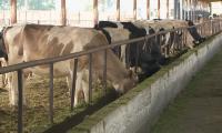 В ЮКО мелкие крестьянские хозяйства объединились в 500 кооперативов