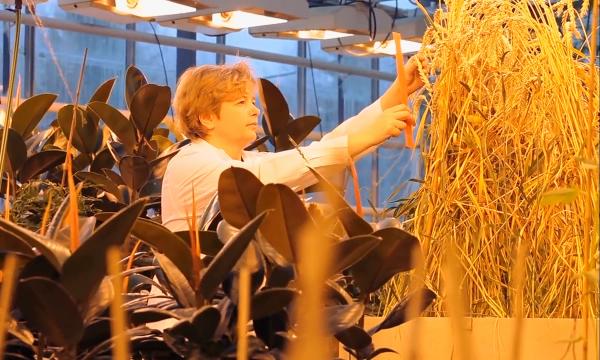 С конца 2018 года на продуктах с ГМО будут ставить обязательную маркировку