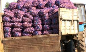 Сапасыз 40 тонна өнім Ресейге кері қайтарылды