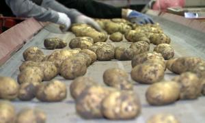 В Атырауской области снизились цены на овощи