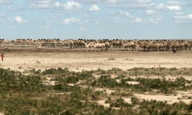 Нашествие каракуртов наблюдается на западе Казахстана