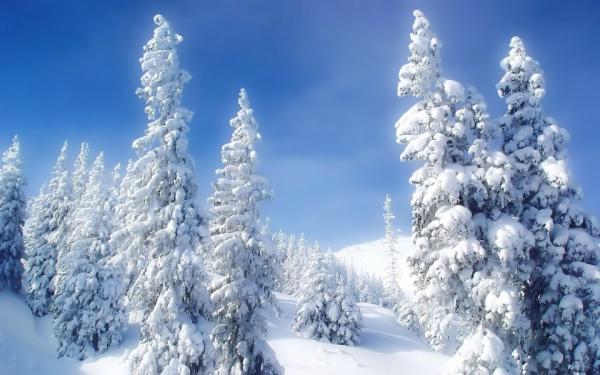 Прогноз погоды на 29 декабря