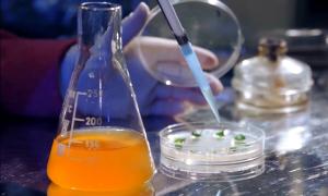 ЕАЭО-ға мүше елдер ГМО өнімдеріне талапты күшейтпек