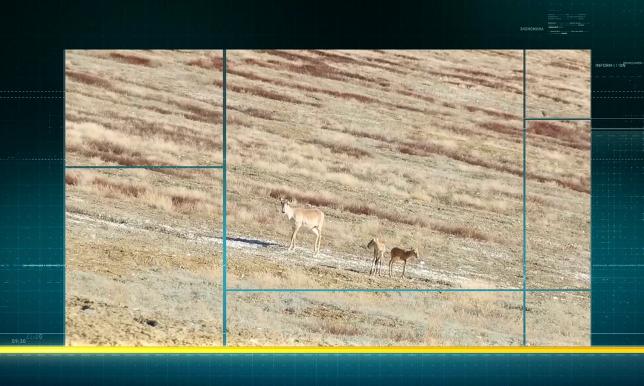 «Ырғыз-Торғай» табиғи резерватында экотуризм дамытылады