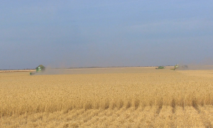 Тәуелсіздік дәуірі: Агросектор экономиканың жаңа драйверіне айналуы тиіс