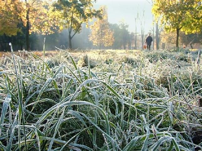 На большей части территории страны ожидаются заморозки