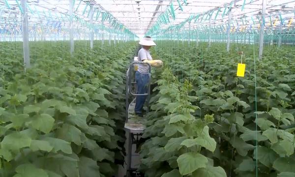 Алматы облысында жылыжайдан алынатын өнім артып келеді