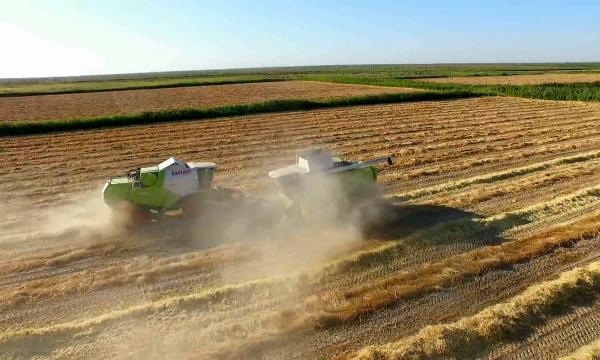 В Кызылординской области увеличили посевы под озимую пшеницу