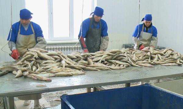 Қызылорда облысында балық өнімдерінің экспорты артты