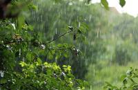 В северных областях Казахстана ожидается сильный дождь