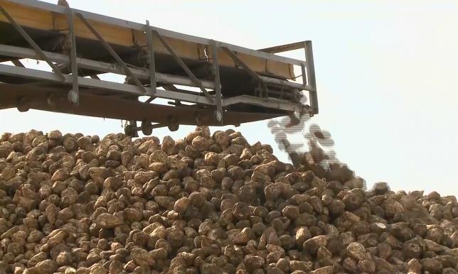 Зараженный картофель не поступит в торговую сеть Казахстана