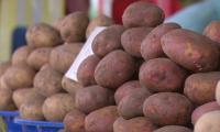 Почему растет цена на картофель?