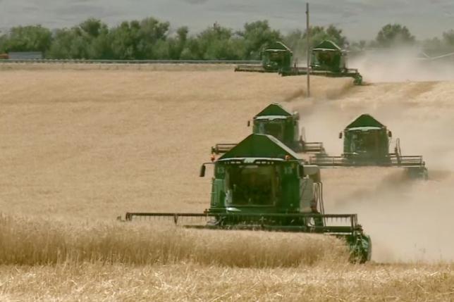 В Жамбылской области заготовлено 542,2 тысяч тонн зерна