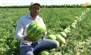 «Продвопрос». Нидерланды-Казахстан: опыт маленького королевства в большом АПК