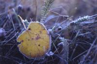 В большинстве областей Казахстана ожидается ветреная погода с осадками