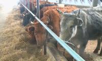 Преимущества цифровизации агропромышленного комплекса обсуждают в Актобе