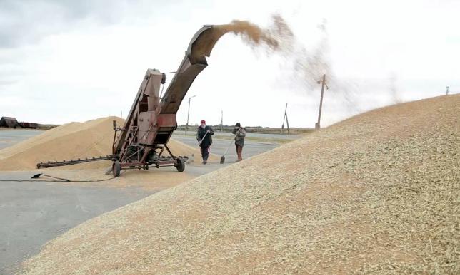 В Костанайской области завершена уборка зерновых