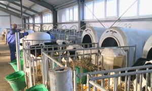 Атырау облысындағы фермада бұзаулар туған сәттен бастап жақсы күтімге алынады