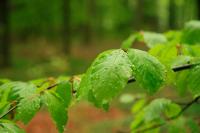 Дожди с грозами ожидаются на большей части территории Казахстана