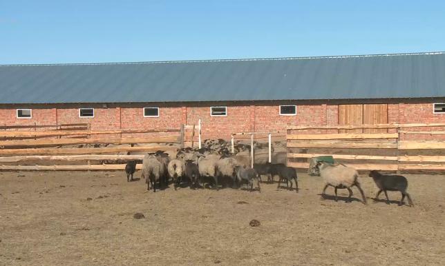 Растет число участков отгонного животноводства в Акмолинской области