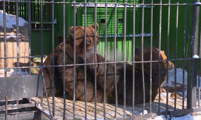 Животные в зоопарке Караганды получают удвоенную норму питания