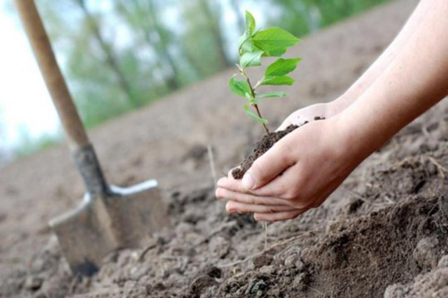 Экологические волонтеры планируют посадить 18 миллионов деревьев
