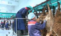 Из Жамбылской области в этом году экспортируют около 900 тонн мяса
