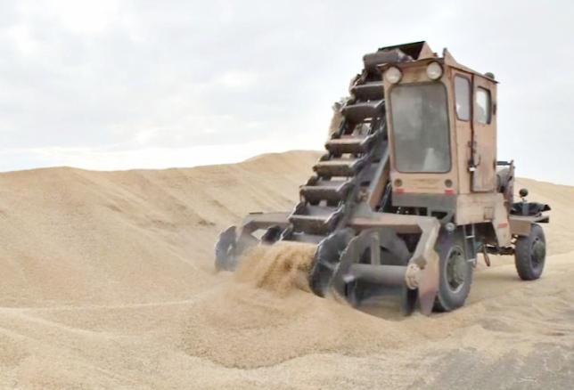 Ақмола облысындағы Жақсы ауданының диқандары 600 мың тоннадан астам астық жинады