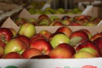 На границе пресечен провоз больше 90 тонн заражённых овощей и фруктов