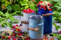 Сезон сбора ягод начался в лесу близ Астаны