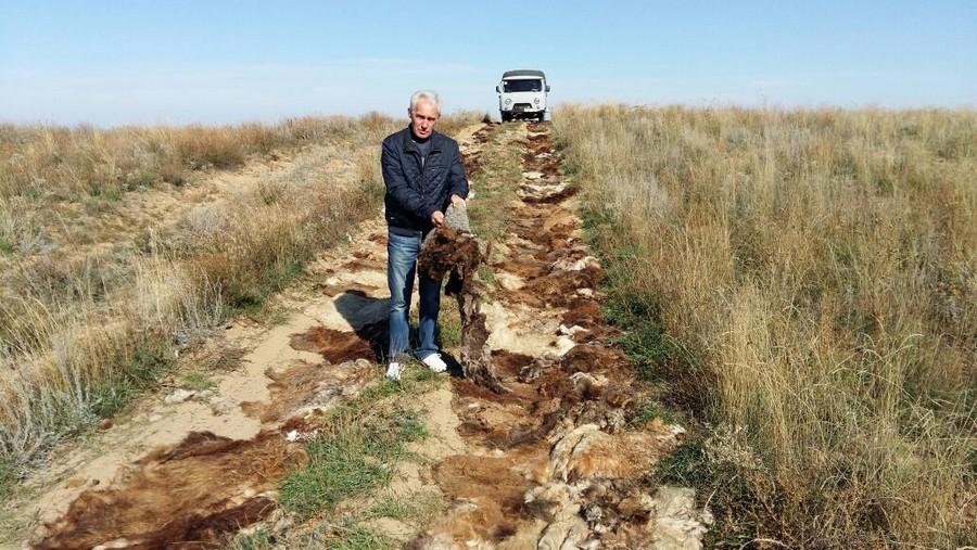В Атырауской области тонны шерсти уложили на степной дороге