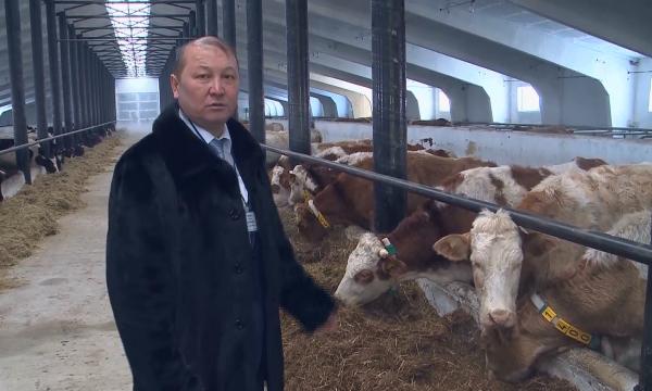 В СКО открыли молочно-товарную ферму на 600 голов КРС