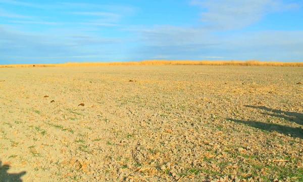 Қызылорда өңірінде ауыл шаруашылығы саласын әртараптандыруға басымдық берілген