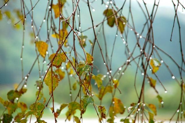 Қазақстанның басым бөлігінде жауын-шашынды ауа райы сақталады