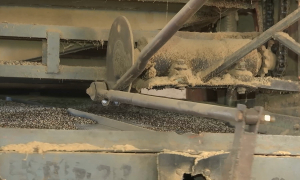 Программа о семеноводческих хозяйствах готовится в ЮКО