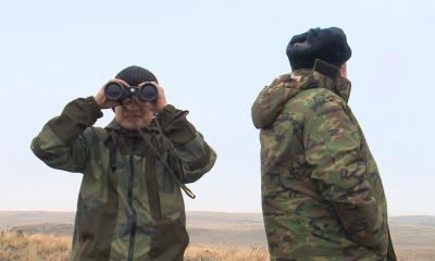 В Казахстане усилена охрана сайгаков