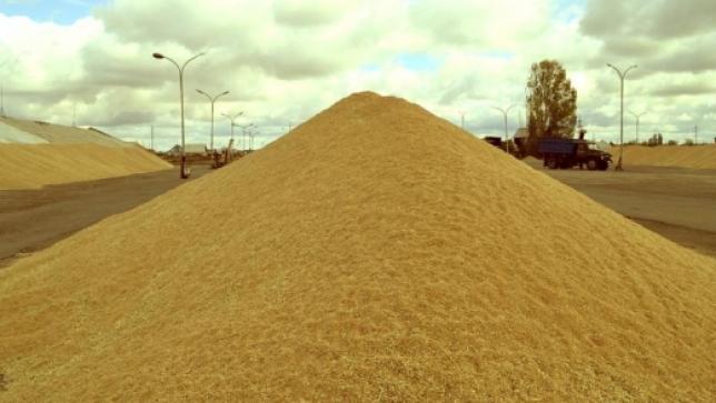ОҚО диқандары 600 мың тоннаға жуық дәнді дақыл жинады