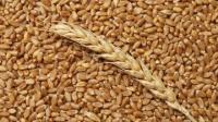 В Казахстане выросли объемы погрузки зерна и муки