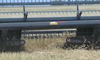 Казахстан планирует увеличить экспорт зерновых культур на 8%